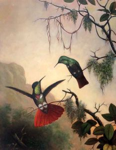 Two Hooded Visorbearer Hummingbirds